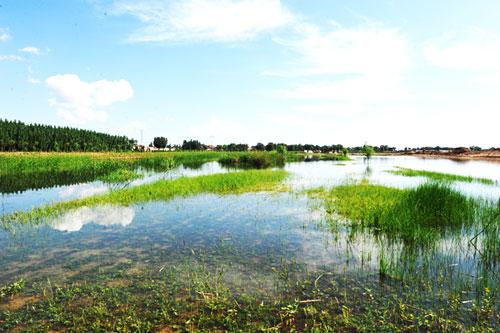 河北建立湿地生态保护补偿制度 明确政府主体责任