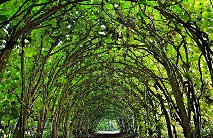 旅游必看:世界上十个最迷人隧道