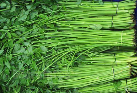 水芹菜的营养价值 水芹菜怎么挑选