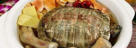 龟肉的作用与功效 哪些人不能吃龟肉