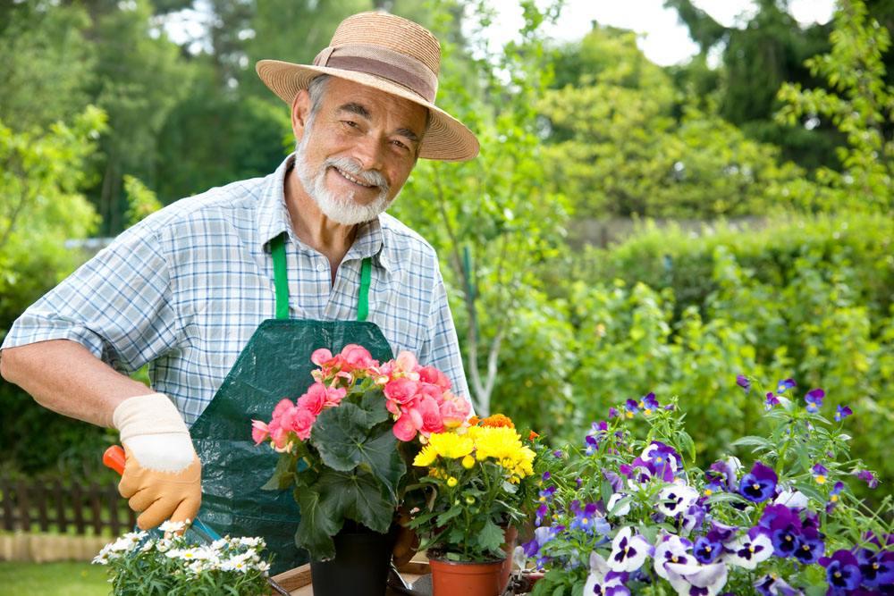 老人养花的好处有哪些