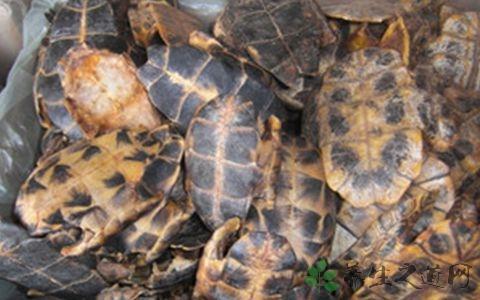 龟板的营养价值 有益肾健骨功效