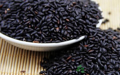 黑米的营养价值 能降血压改善贫血