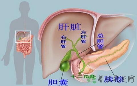 胆囊大小正常值是多少 胆囊炎的症状