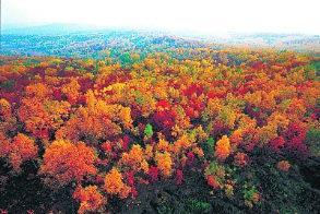 秋季观景的绝佳之地 缤纷色彩的视觉盛宴