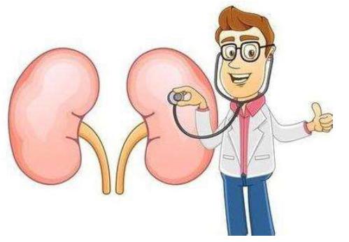 肾宝片效果怎么样?怎样躲避肾透支?