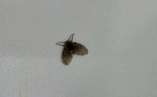 Kret克莱德管道疏通剂 消灭厨房厕所小飞虫小能手
