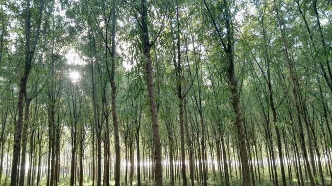 河南六旬老人新疆造林五千亩立志献国家