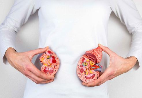 6种天然补肾食物的食物你了解过吗?
