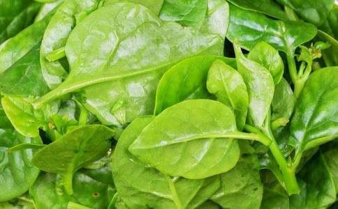 你吃过木耳菜吗?你知道吃木耳菜对健康有哪些帮助吗?