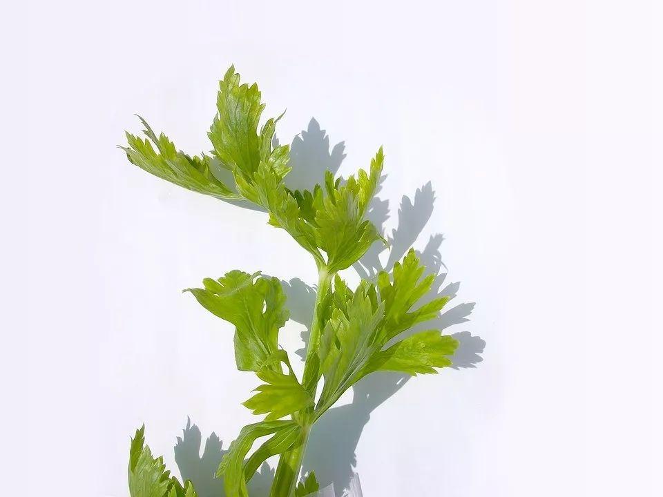 芹菜叶拌花生可以补钙是真的吗?