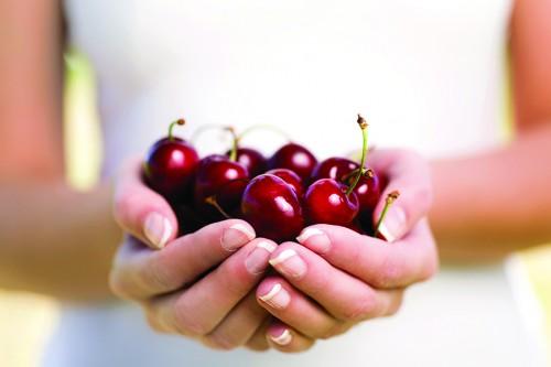 冬季C位水果,塔斯马尼亚樱桃正当季